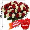 Фото товара 101 роза микс красная и белая (50 см) в Покровске
