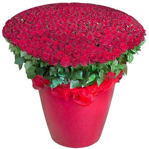 Фото товара 301 красная роза в большом вазоне в Покровске