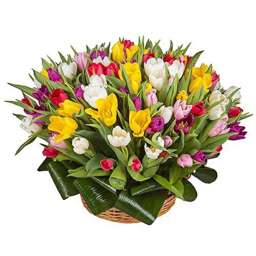 Фото товара 75 тюльпанов микс (все цвета) в корзине в Покровске